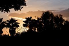 Amanecer en Melilla (cogozalez1) Tags: ambiente amanecer palmeras españa españaenafrica belleza melilla naturaleza spain street sxxi cielo nubes