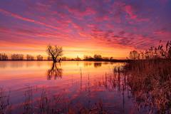Kleurrijke ochtend voor zonsopkomst bij de Grote Bloem (nldazuu.com) Tags: kolk sunrise gelderlad zonsopkomst landschap gelderland lingewaard boom kleurrijkhuissen grotebloem kleurrijk huissen