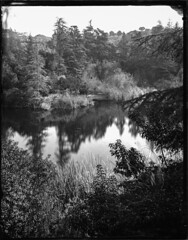Franklin Canyon Park - Wet Collodion Negative (Silver and Iron Tintype) Tags: senecaimprovedview largeformat 4x5 4x5reducingback newguycollodion epsonv700 wetplatecollodion franklincanyonpark beverlyhills california glassnegative glassplate wetcollodionnegative collodionnegative newguynegativecollodion ammoniumthiosulfate