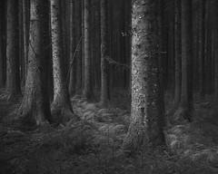 Outside (www.neilburnell.com) Tags: mono monochrome bw black mood atmosphere trees woodland forest devon bellever