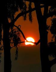 Deep Red Glow through my Window (PsJeremy) Tags: red sunset bushfire gumtree