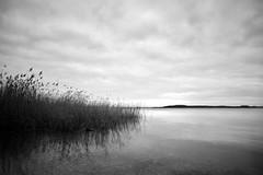 Strelasund - Schilf (tom-schulz) Tags: eosm3 meike1228 monochrom bw sw rawtherapee gimp stralsund thomasschulz wasser sund strelasund himmel wolken schilf