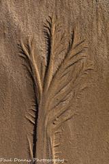 Sand Tree (minar5) Tags: sand tree beach swanseabayfront wales fujifilm