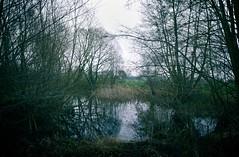 Wasser & Bäume | 13. Januar 2020 | Hohenfichel - Kreis Plön - Schleswig-Holstein (torstenbehrens) Tags: hohenfichel kreis plön schleswigholstein wasser bäume | 13 januar 2020