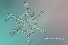 IMG_8374 (nitinpatel2) Tags: snowflake snow crystal winter macro ice nature nitinpatel