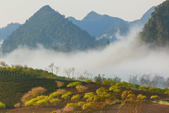 _MG_8319.0212.Tân Lập.Mộc Châu.Sơn La (hoanglongphoto) Tags: fog foggy thickgloom misty haze mists mist thickfog hoanglongphoto canoneos5dmarkii mộcchâu sơnla vietnam việtnam northvietnam northernvietnam vietnamlandscape scenery vietnamscenery mocchau landscape morning nature asia asian northwestvietnam naturelandscape mocchaulandscape sky vietnammountainouslandscape forest theforest earlyfrost earlymorningfog fogofmocchau sươngmùmộcchâu tâybắc tânlập sươngmù núi mountain phongcảnhthiênnhiên sươngsớmmộcchâu sunshine sunny morningsunshine buổisáng nắng nắngsớm plumblossom hoamận hoamậnmộcchâu đồihoamận earlysunshine canonef100400mmf4556lisusm flanksmountain sườnnúi mâymộcchâu mâyluồnmộcchâu
