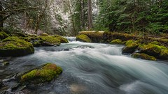 Revisited (Matthew James Lewis) Tags: washingtonstate water washington winter aldertrees alonetime snow trees cedertrees firtrees forest ferns bigquilvalley bigquilceneriver landscape longexposure moss mapletrees northwest natureatitsfinest olympicpeninsula olympicnationalforest