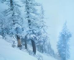 A defintion of impassive (Zeb Andrews) Tags: pentax67 kodake100 tomdickandharry slidefilm oregon wilderness zaahphoto forest winter snow cold 6x7 mediumformat filmisnotdead frozen mthoodwilderness snowshoeing
