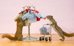 Find one you like? (Nancy Rose) Tags: squirrels minitures wildlife outdoors diorama patience jackets shoppingcart shopping