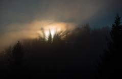 STRAHLENDER MORGEN . RADIANT MORNING (LitterART) Tags: morgenröte sun sunbeams sonnenstrahlen wald nature wood forest steiermark gold kitsch vision erleuchtung enlightenment radiant strahlend