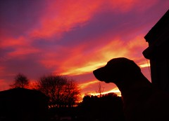Sky by my side..x (Lisa@Lethen) Tags: labrador dog silhouette morning sunrise weather