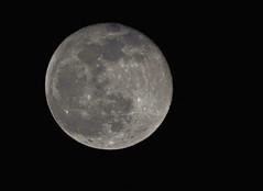 january moon (try...error) Tags: mond vollmond jänner nature moon supermoon austria vienne vienna wien olympus panasonic 100400 leica luna lune