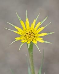 Wild flower (JSB PHOTOGRAPHS) Tags: jsb9262 rogue river bokehlicious bokeh wild flower nikon d800 28300mm