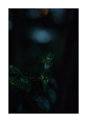 This work is 20/21 works taken on 2019/12/8 (shin ikegami) Tags: sony ilce7m2 a7ii sonycamera 50mm lomography lomoartlens newjupiter3 tokyo 単焦点 iso800 ndfilter light shadow 自然 nature naturephotography 玉ボケ bokeh depthoffield art artphotography japan earth asia portrait portraitphotography