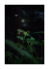 This work is 21/21 works taken on 2019/12/8 (shin ikegami) Tags: sony ilce7m2 a7ii sonycamera 50mm lomography lomoartlens newjupiter3 tokyo 単焦点 iso800 ndfilter light shadow 自然 nature naturephotography 玉ボケ bokeh depthoffield art artphotography japan earth asia portrait portraitphotography