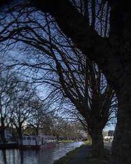 HTMT by Grand Canal Dublin (Wendy:) Tags: dublin htmt canal trees barge