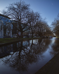 Grand Canal reflections (Wendy:) Tags: dublin canal reflections trees