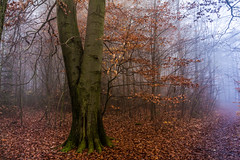 Out of context (Petr Sýkora) Tags: les mlha podzim forest nature mist autumn tree czech