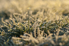 Sunrise in the grass (~ Jessy S ~) Tags: nikon nikkor 105mm 105 macro 28 frost frozen gel herbe grass morning matin ice cold froid glace micro macrophotography macrophotographie macroworld nature 5000 bokeh frosty winter hiver sun sunny sunlight sunrise
