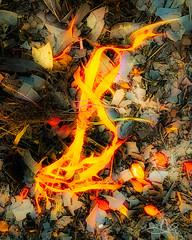 Sea Weed IG-2-Topaz (caralan393) Tags: topaz arty experimental bushfire coals fire burning