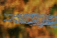 Lake Gold (ulla.smidt-berner) Tags: baldeneysee lake baldeney essen abstract