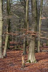 tree (Jaco Verheul) Tags: d7100 jaco nikon verheul bos forest veluwe woods tree macro sigma hoogsoeren gelderland nederland landscape