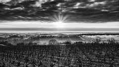 Sun light (ZeGaby) Tags: blackandwhite brumes champagne fujifilm fujinon27mm landscape marne mist naturephotography noiretblanc paysage paysagedechampagne sunrise vigne vignoble vines vineyards xt1