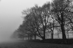 Winter Trees (l4ts) Tags: landscape derbyshire peakdistrict whitepeak newhaven trees mist horseshoeplantation drystonewall blackwhite monochrome