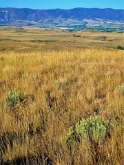 Great Plains - Along The Bozeman Trail (STL Missouri) Tags: light morning landscapes plains bozeman trail
