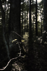 Veiledning (Vincere Noel) Tags: trees tree forest woods woodland newengland summer spring light sun sunlight shadows outside leaves leaf morning nature natur naturephotography landscape green yellow art canon