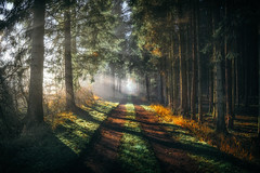 Corridor Of Light (der_peste (on/off)) Tags: forest path light sunlight sunbeams raysoflight raysofgod sunrays morning sunrise shadow lightandshadow nature walkway