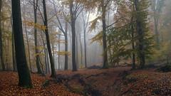 Nebelwald (teckjan) Tags: autumn bäume dreamy fog foggy forest haze melancholia melancholie melancholy misty moody nature nebel november trees wald woods waldmagie