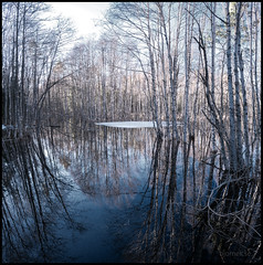 Flooded Forest (Svartek) Tags: countries fineartphotography flooded forest landscape landscapephotography nature naturelover naturephotography nordic river samsung scandinavia sky sverige sweden uppland florarna