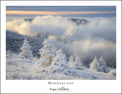 Wonderland (DKNC) Tags: roundbald roanhighlands northcarolina nc winter snow fog sunrise rime ice cold frosty daleking