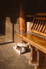 Cat and Seek (Taomeister) Tags: kodaknewektachrome nikonfm3a voigtlandernoktonsliis58mmf14 e100 ektachromee100 westlakehangzhou