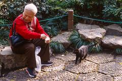 Beggar Cat (Taomeister) Tags: kodaknewektachrome nikonfm3a voigtlandernoktonsliis58mmf14 e100 ektachromee100 westlakehangzhou
