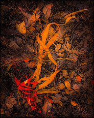 Sea Weed IG-1-Topaz (caralan393) Tags: topaz arty experimental bushfire coals fire burning