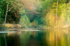_AAA9686 (Betere LandschapsFoto) Tags: 2018 bos fall forest geel green groen herfst nederland noordbrabant november oisterwijk softfocus thenetherlands ven vennen yellow