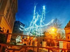 C h a r m i n g     evening 🌇 (helen_flow ♡) Tags: city night walker lights park dreamer words poet verses affirmation darkness dark colours 🌠 🎆 🎨 🌆 🌙