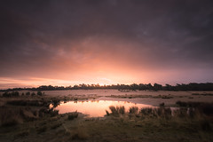 Sunrise, Loonse en Drunense Duinen, The Netherlands (Betere LandschapsFoto) Tags: 06hardgrad 2016 beterelandschapsfoto filter gras grass green grey grijs groen januari january lee lightroom loonopzand loonseendrunenseduinen nederland noordbrabant photoshop reflectie reflection reflections sand sunrise thenetherlands water weerspiegeling winter workshoplandschapsfotografienoordbrabant zand zonsopkomst beterefoto