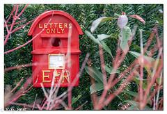 Bird house for rent (Ray B's world) Tags: nikond500 nikon outside empty red birdbox garden