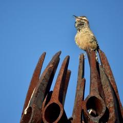 Morningsong (A Cactus Wren-dition) (MPnormaleye) Tags: song sing singing music bird wren cactus sculpture rust exhibit desert southwest utata cute square humorous