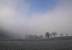 ...Winter 2016... (shallowcreek) Tags: winter raureif hoarfrost feld field wiese meadow nebel fog baum tree himmel sky wald forest natur nature landschaft landscape austria