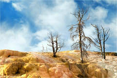 Mammoth Hot Springs (Sandra Lipproß) Tags: yellowstone nationalpark wyoming usa mammothhotsprings travertine hotspring deadtrees trees nature outdoor travel landscape sky blue clouds