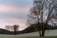 Some Trees in Winter (Deepmike70) Tags: frost landscape sunrise sky nature woods wodland fields gras