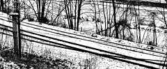 Lines in the Snow (Professor Bop) Tags: professorbop drjazz appleiphone8 brattleborovermont winter snow railroadtracks railroad railway lines linear track railwaytracks tracksinthesnow trees powerlines mosca