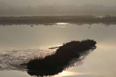 Evanescente (lincerosso) Tags: laguna lagunadivenezia lagunanord liopiccolo valleolivara inverno luce nebbia paesaggio evanescenza bellezza armonia