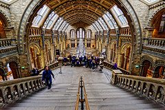 Natural History Museum (Croydon Clicker) Tags: museum building hall room gothic steps rails people skeleton whale architecture london kensington nikond700 nikkor