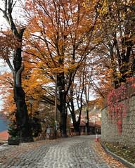 Autumn Colours (RobW_) Tags: autumn colours metsovo epirus greece sunday 24nov2019 november 2019
