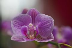 DSC00055 (ben.mayer44) Tags: macro fleurs flowers sony alpha 7r tamron 90mm